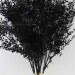 Ruscus zwart