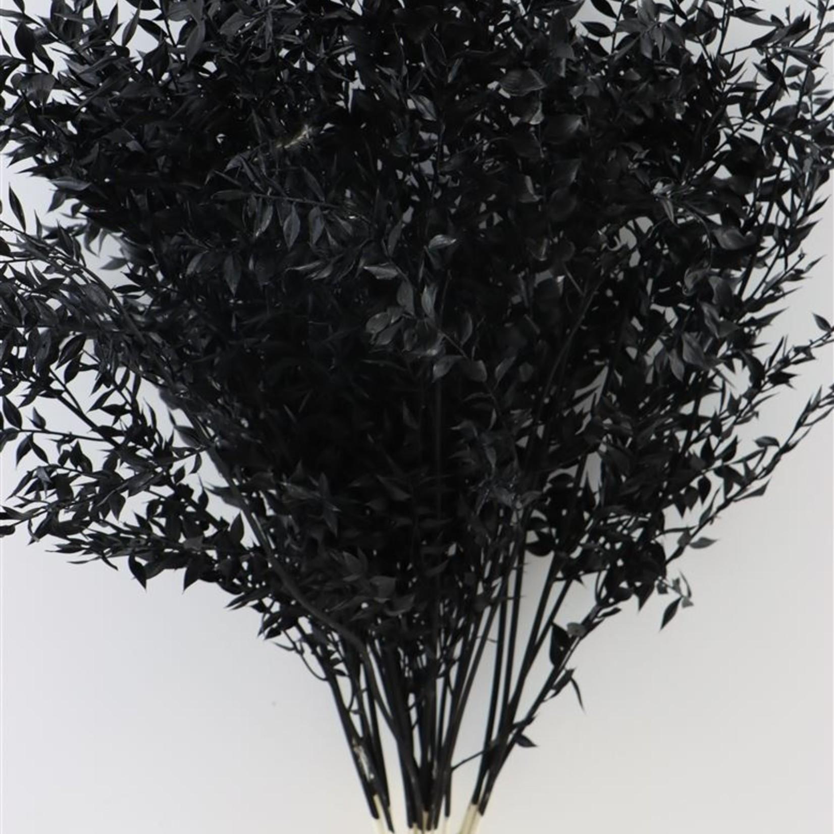 Ruscus black 5 stems