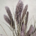 Setaria Frosted Milka