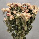 Spray Roses Twisted Creme