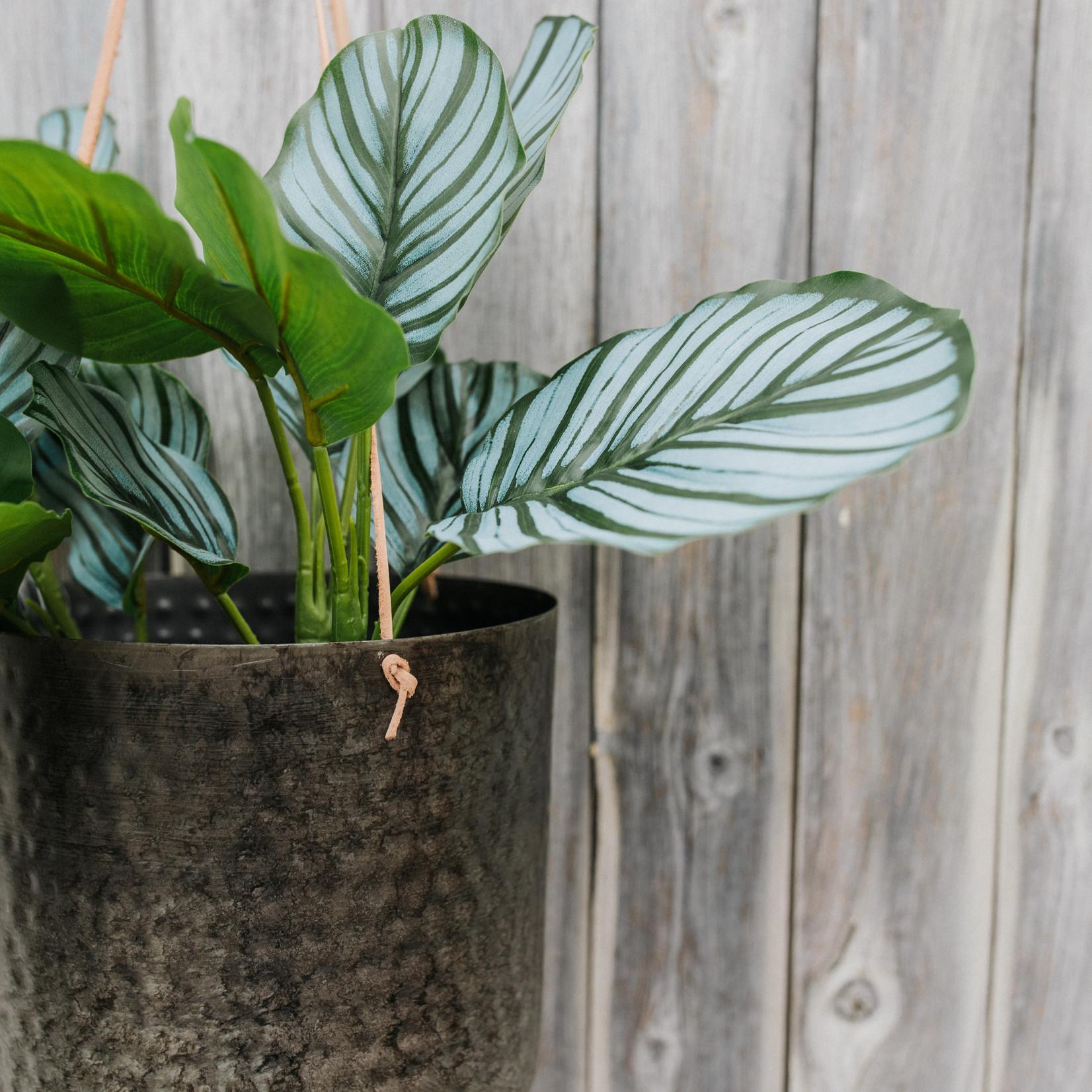 Artificial plant Calathea ⇑30 cm in black pot.
