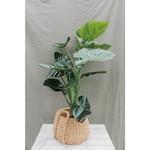 Artificial Taro plant ↥ 100 cm
