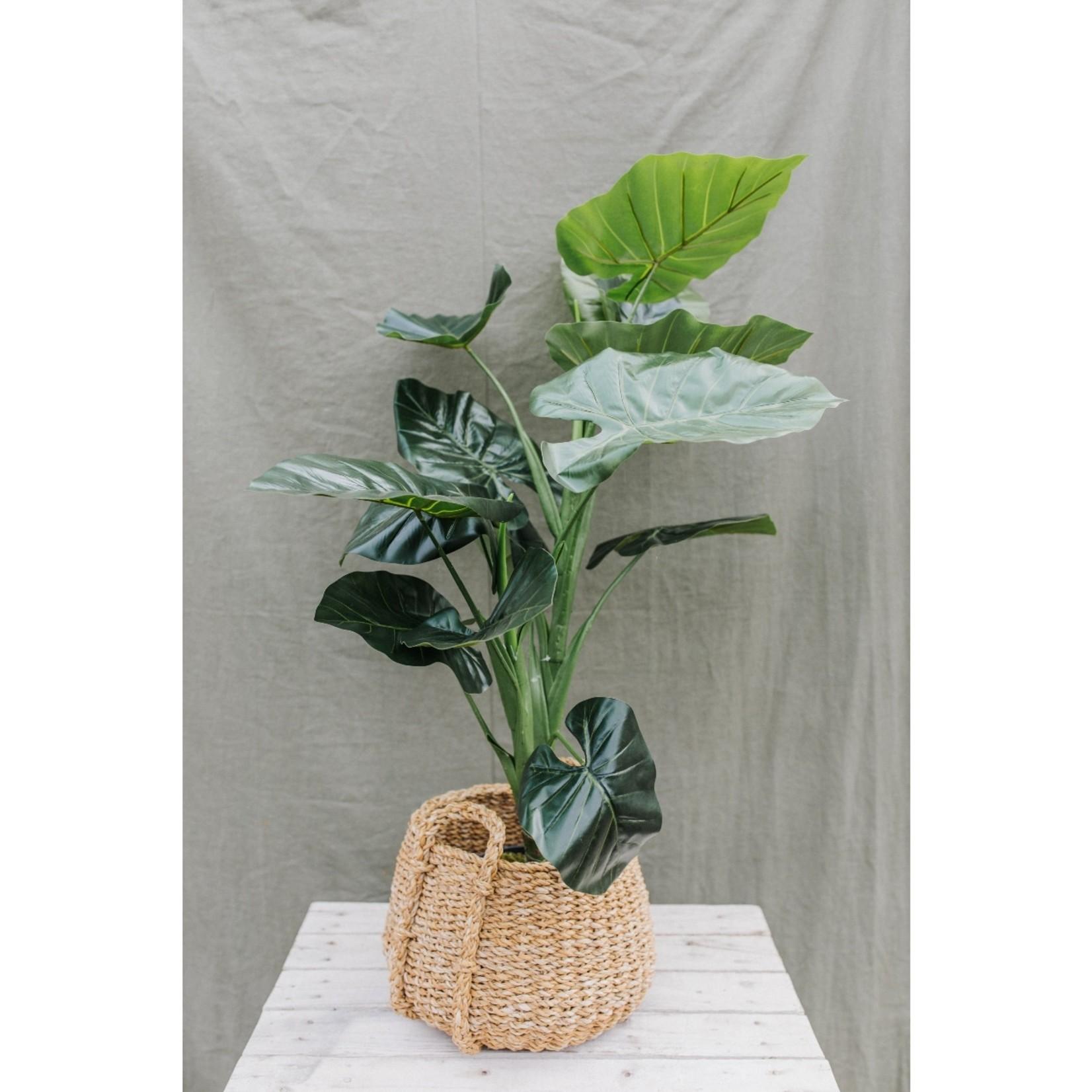 Artificial Taro plant ↥ 100 cm  in black pot