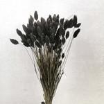 Phalaris zwart