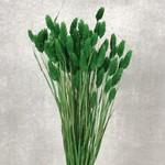 phalaris green