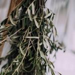 Olivenzweige