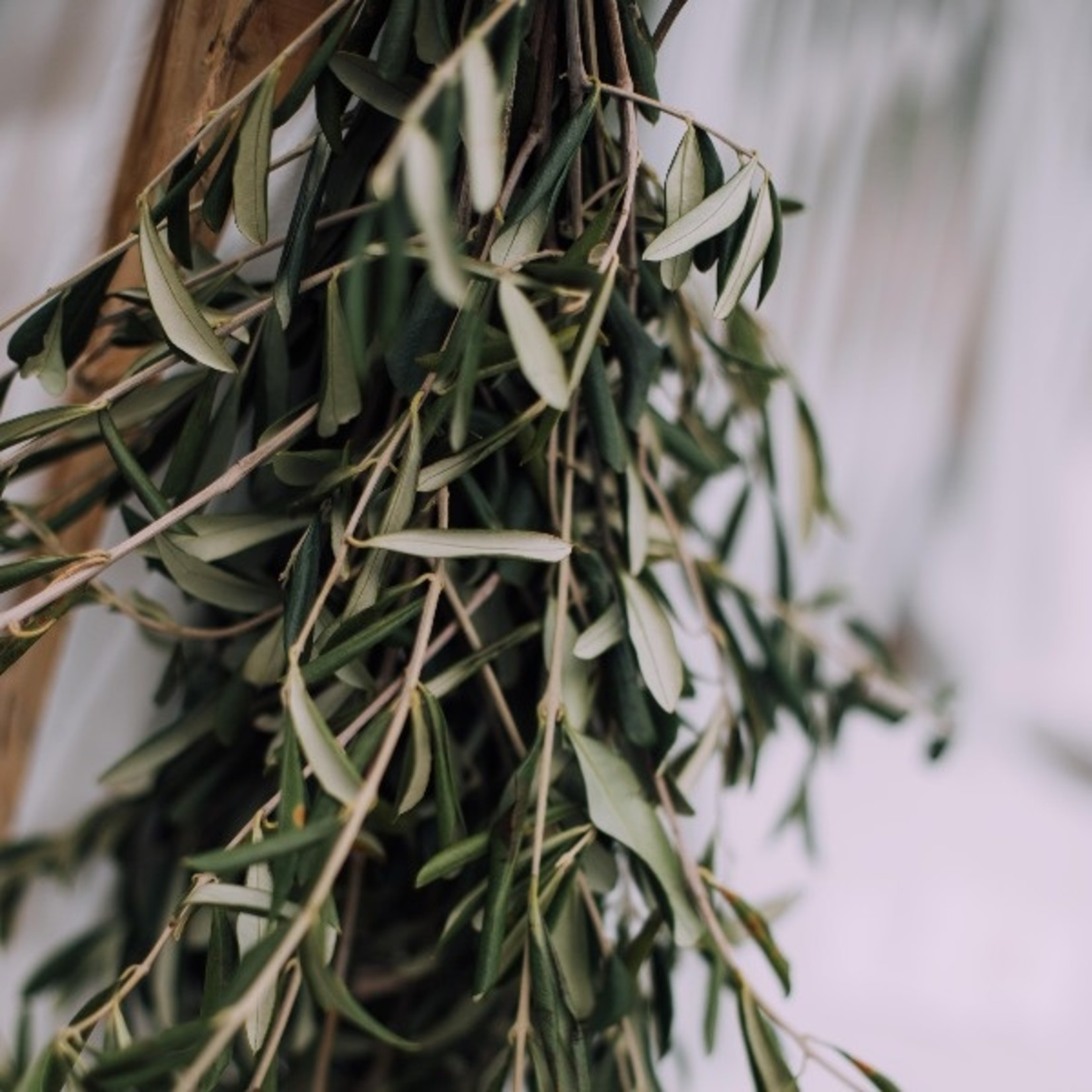 Fresh olive branches per 250 grams