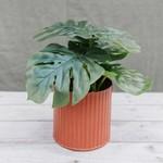 Artificial Monstera plant ƥ 30 cm