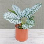 Künstliche Calathea-Pflanze Ø 30 cm