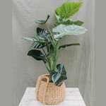 Artificial Taro plant ⇑ 100 cm