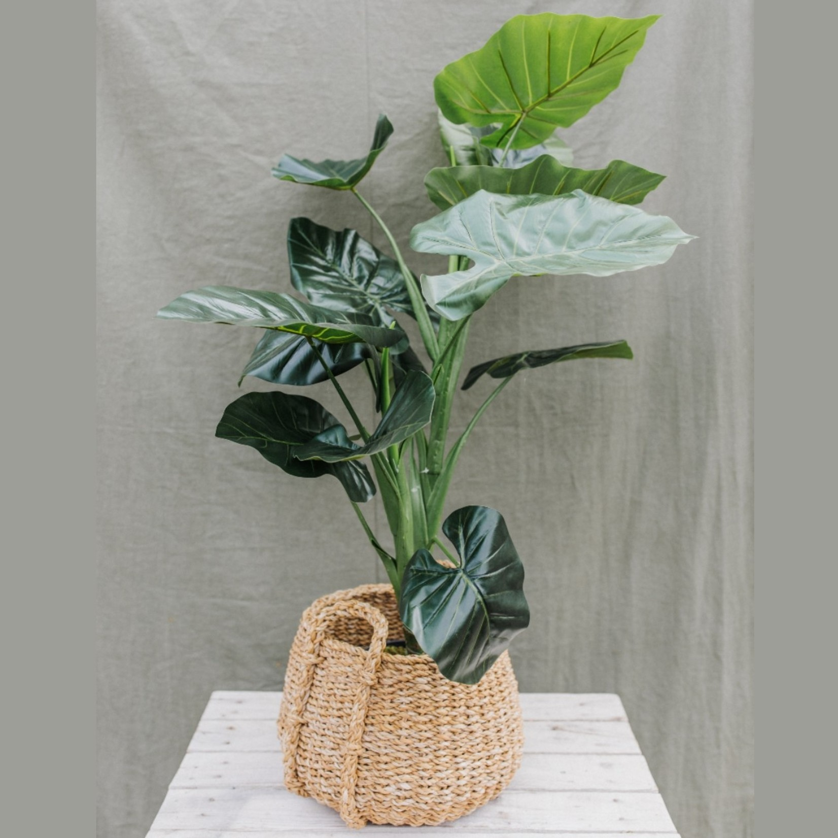Artificial Taro plant ⇑100 cm  in black pot