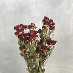 Gedroogde rode spray rozen