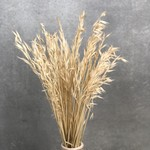 Dried and bleached oats (avena)