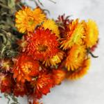 Gedroogde Helichrysum oranje (strobloem)