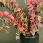 Eucalyptus Stuartiana herfst mix