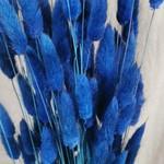 Lagurus dark blue