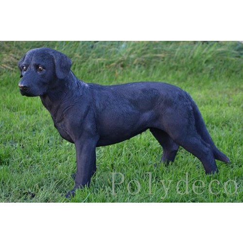 Polydeco Polystone labrador staand