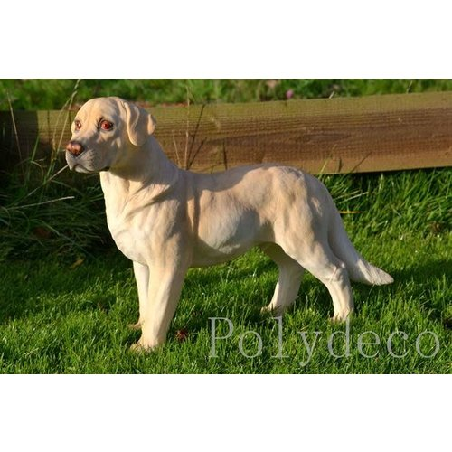 Polydeco polystone labrador wit staand