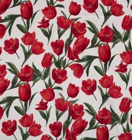 Nooteboom Tulpen op witte achtergrond