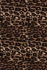 Bengaline panther