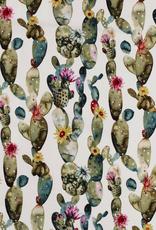 El. katoen cactus