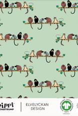 Pipi monkey neo mint