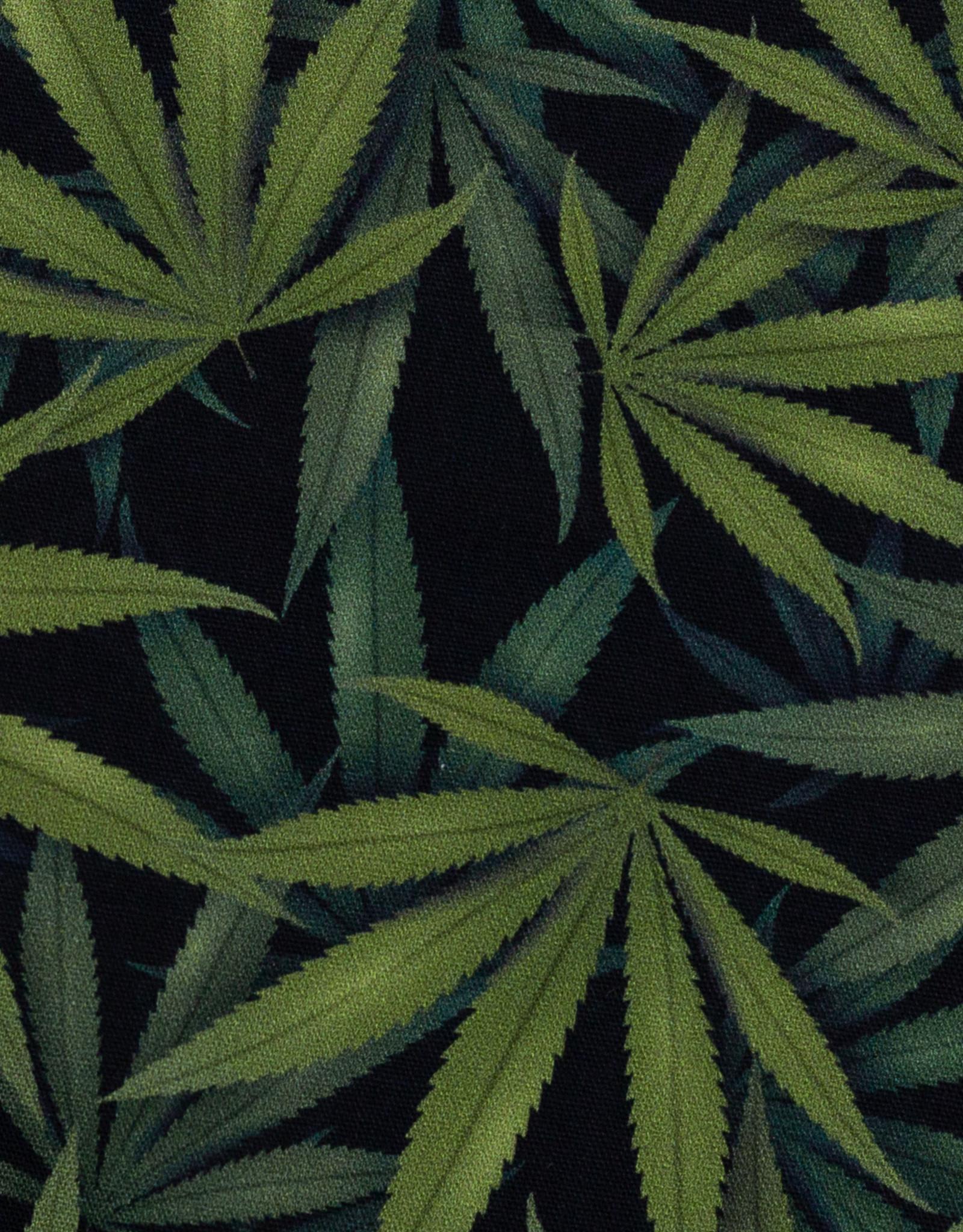 Hemp leaves big green black