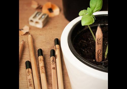 Sprout Sprout Vergeet-me-nietjes potlood