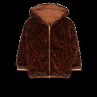 Ammehoela AM.Lola.03 Brown-leopard