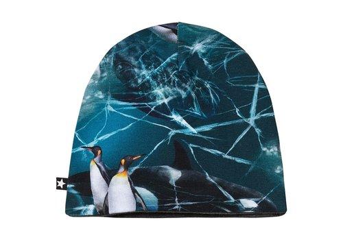 Molo Molo Ned Antarctica