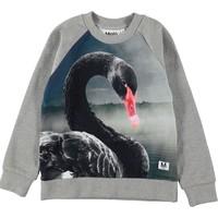 Molo Black Swan