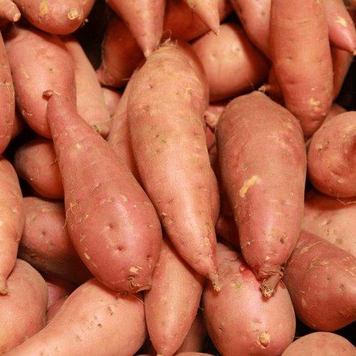 Zoete aardappelplant