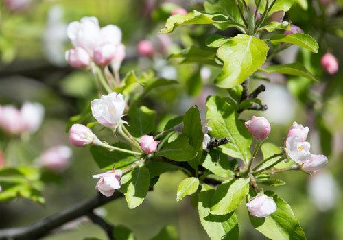 Bonsai Fruit - Taste of Nature