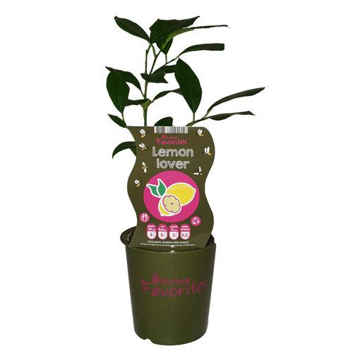 Citroenplant - Fruticos Favorites
