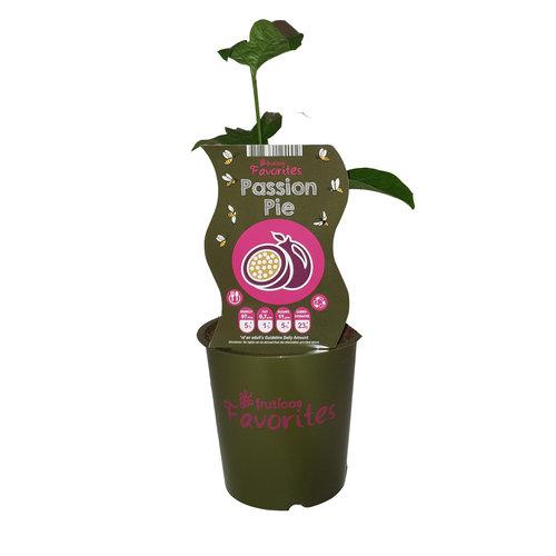 Passievrucht plant