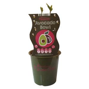 Avocado plant - Avocado Bowl