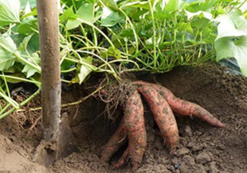 Overpotten en planten