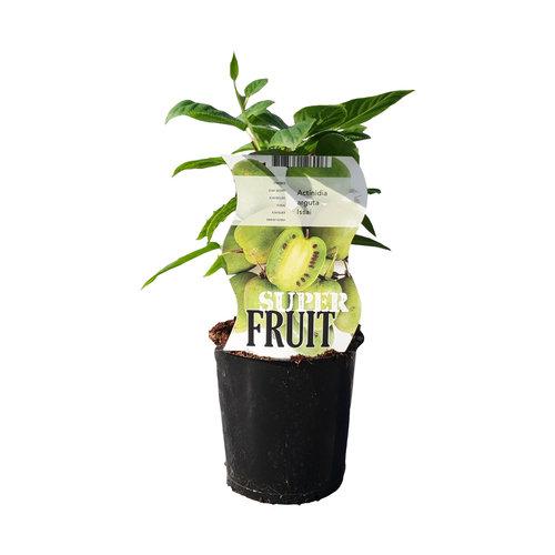 Zelfbestuivende kiwiplant - Issai