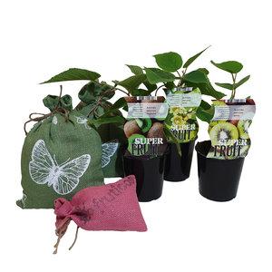 Kiwi Plantenpakket