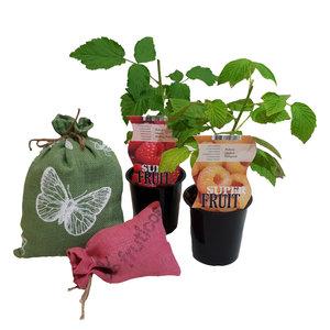 Frambozen Plantenpakket