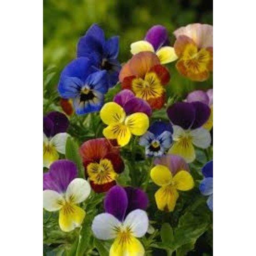 Bloemzaden pakket - eetbare bloemen kweekboeket
