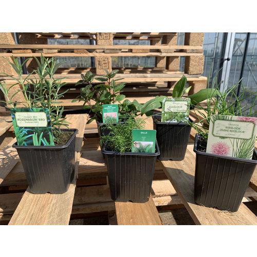 Kruiden Plantenpakket