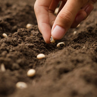 Wie zaait, zal oogsten