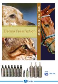 Derma Brochure