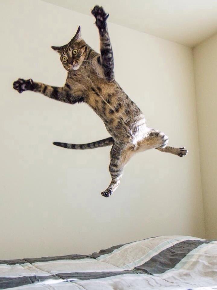 hoge sprong kat