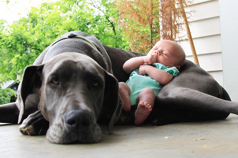 kind op hond