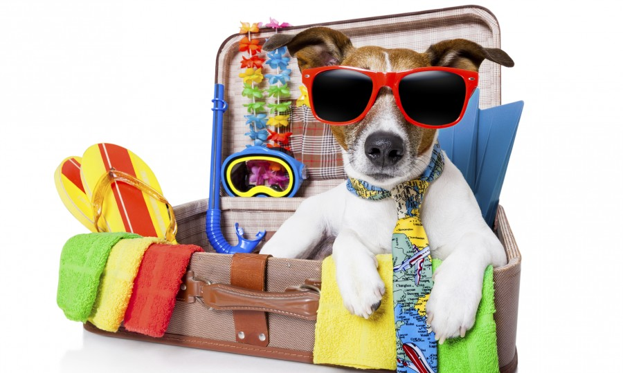 Vakantiestress huisdieren