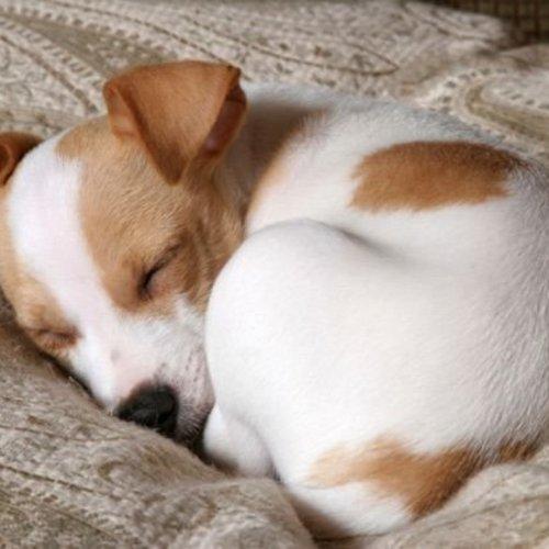 Schlafposition Hund