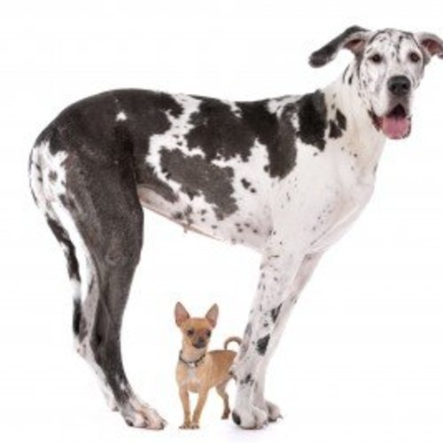 Das Alter der Hunde
