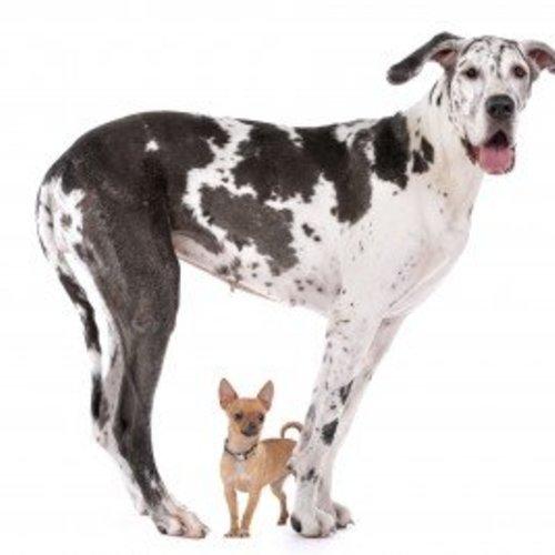 Leeftijd van honden